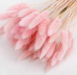 DrieD flowers bouquet online shopping - Props Rabbit Tail Grass Dried Flowers Bouquets Rabbit Tail Grass Arts Crafts tail grass bristlegrass bouquets bunches LJJK1184