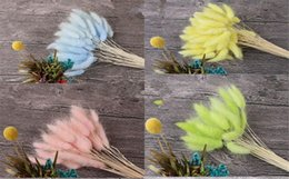 $enCountryForm.capitalKeyWord Australia - New Décor 20 stems Natural Dried Flowers Colorful Lagurus Ovatus Real Flower Bouquet for Home Wedding Decoration Rabbit Tail Grass Bunch