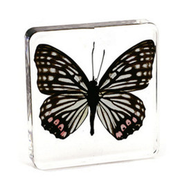 mouse blocks Australia - Resin Embedded Butterfly Bugs Specimens Paperweight Transparent Mouse Block New Type Student Biology Science Learning&Education Toys&Kits