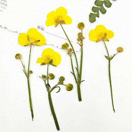 $enCountryForm.capitalKeyWord Canada - Original Buttercup On Stems Christmas Ornaments DIY handmade Raw Material Teaching dried flower 1 lot 100pcs For Holiday Party Decoration