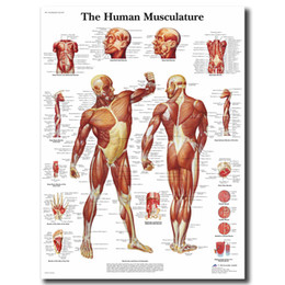 Cartoon Map Australia - Human Anatomy Muscles System Wall Art Canvas Posters Painting Body Map Pictures For Medical Education Home Decor Artwork
