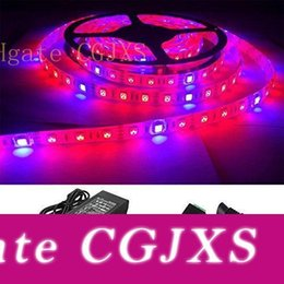 grow light strips UK - 16 .4ft  5m Red Blue 4 :1 Waterproof 5050 Growing Led Strip Lights Aquarium Greenhouse Hydroponic Plant Growing Light 5a Power Adapter