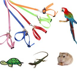 cartoon lizard Australia - The latest new small animal parrot bird hamster turtle lizard traction rope traction strap strap traction rope, free shipping