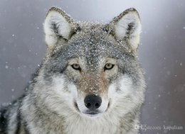 predator figures NZ - Free Shipping Predator Wolf Snow Art Posters Print Photopaper 16 24 36 47 inches