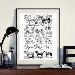 canvas prints horses Australia - Horse Print Black and White Veterinary Medical Poster Horse Anatomy Illustration Wall Art Picture Canvas Painting Wall Decor