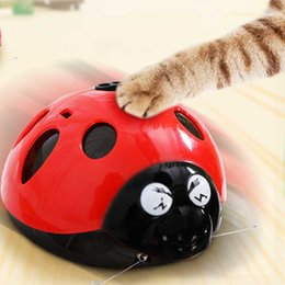 battery operated toys 2021 - [& MPK Store] Catch Me If You Can Super Fun Cat Toy, Battery-Operated Pet Toy, Watch Our Video To Know More