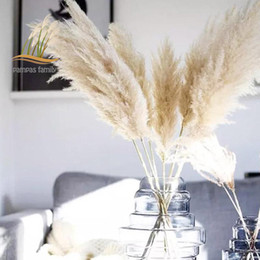 boho wedding decor Canada - 85-120cm Pampas Grass Extra Large Natural White Dried Flowers Bouquet Fluffy for Boho Vintage Style Home Wedding Flowers Decor