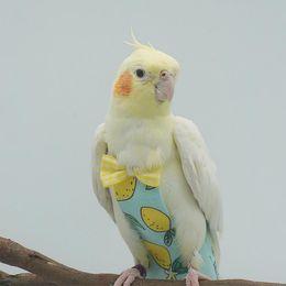Bird Diaper Soft Birds Voli Volo Size Lavabile Pappagalli riutilizzabili Pannolini con bowtie Decor PET PET PET PETS T2I52800 in Offerta