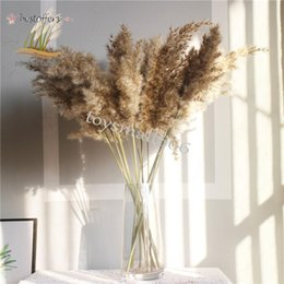 Gerçek Pampalar Çim Dekor Doğal Kurutulmuş Çiçekler Bitkiler Düğün Çiçekler Kuru Çiçek Buketi Kabarık Sevimli Tatil Ev Dekor için FY2497