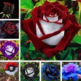 Bahçe Malzemeleri Siyah Gül Tohumları Kırmızı Kenar Ile, Nadir Renk Popüler Bahçe Çiçek Tohum Çok Yıllık Bush veya Bonsai Çiçek Ev Garde ZC142 Için