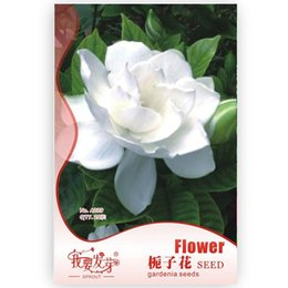 Great Gardenia Seeds Cape Jasmine Seeds Beautiful Flowers, I Want To Sprout  Original Package,20 Particles Pack