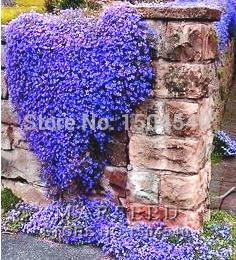 Perennials blue flowers canada best selling perennials blue free shipping50 perennial flowering groundcover seeds rock cress bright blue mightylinksfo
