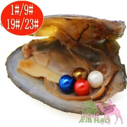 pearl oyster shell wholesale Australia - Vacuum Packaging Oyster Wish Freshwater Pearls Pearl Shell Different from Pearls Pearls Color Pearl Mystery Gift Surprise