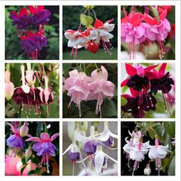 Fuchsia seeds online shopping - 100 Pieces Fuchsia Seeds Lantern Flower Bonsai Colorful Perennial Flowers Plants