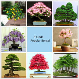 $enCountryForm.capitalKeyWord Canada - Free shipping 8 kinds Bonsai Tree Seeds, 240 seeds, Perfect DIY Home Garden Bonsai package
