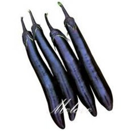 Discount heirloom flower seeds - Eggplant Long Black Vegetable 100 Seeds Easy to Grow from Seeds Heirloom Vegetable Seed Container Balcony