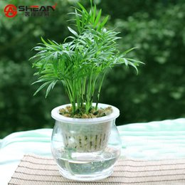 flower seeds sale UK - Hot Sale Lucky Bamboo Seeds Potted Balcony Radiation Absorption Planting is Simple - 100 PCS