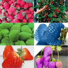 2016 8 kinds Strawberry Seeds, 1 Kind 200 Pcs, Total 1600 Pcs,Green Purple Rose White Black Red BLUE Climbing Strawberry Seeds HY1159 on Sale