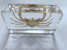 FREE SHIPPING yqtdmy Hand Crab in Clear Block Education Fashion Specimen on Sale