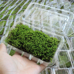 Wholesale Fake Green Moss Fake Mini Green Moss Stone For Micro Landscape Garden Ornaments Nature Musci Stone For Decor Gardening Tools Bonsai Display