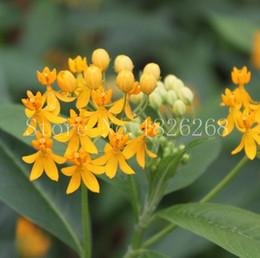 Outdoor Flower Gardens Canada - 60 pcs Garden Balsam seeds showy balsamine Impatiens flower seeds potted flowers Outdoor plant