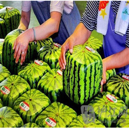 2017 Herb Garden Seeds Free Free Shipping Garden Plants 20pcs Free Shipping  Square Watermelon Seeds Very