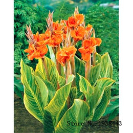 fragrant flowers NZ - Multi color optional Canna Seeds Bonsai Flower Plant Seeds Very Fragrant 10 Particles   lot T012