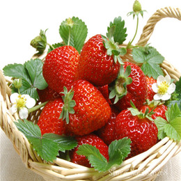 Chinese  Fruit Seeds Strawberry Organic Berries Seed fruit bonsai plant 200pcs S029 manufacturers