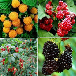 Discount strawberry pack Hot!High Quality Raspberry Seed 100pcs pack Big Raspberry Seeds Fruit Seeds flower pots Strawberry bonsai Blackberry Bon