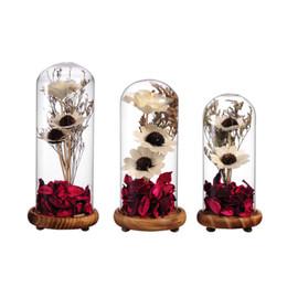 $enCountryForm.capitalKeyWord UK - Portable Flower Vase Terrarium Succulents Plants Micro Landscape Cover and Filler Terrarium Home Decor S M L Sizes
