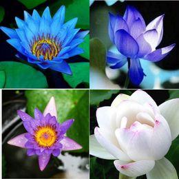Venta al por mayor de Barato Envío Gratis Good Looking Water Lotus Semillas Blanco Azul Amarillo Rosa Agua Lotus Semillas HY1162