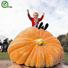 Grow veGetable seeds online shopping - New plants Giant pumpkin Seeds garden plant organic Vegetable Seeds Easy To Grow R013