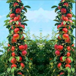 Indoor Fruit Plants Online   Indoor Fruit Plants for Sale
