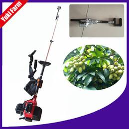 Benzin zeytin hasat makinesi zeytin hasat makinesi çalkalayıcı zeytin toplama makinesi meyve ağacı hasat makinesi meyve bahçesi meyve ağacı çalkalayıcı