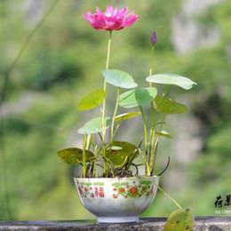 defa407cc9d0 pink color Bowl lotus water lily flower bonsai Lotus seeds garden  decoration plant 10pcs F127