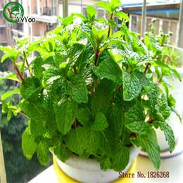 $enCountryForm.capitalKeyWord Australia - Green Mint Seeds Flower Pot Planters Garden Bonsai Grass Seed 30 Particles   lot H019