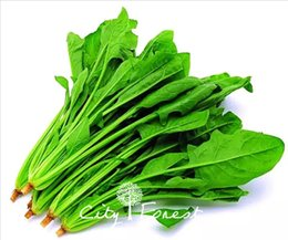 Grow veGetable seeds online shopping - Chinese Spinach Vegetable Seeds Bag Easy to Grow from Seeds Heirloom Vegetable Seed Very Delicious High Yield