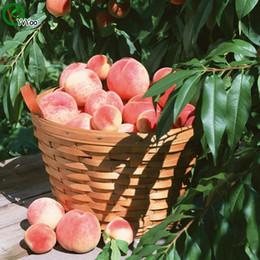 Peaches seeds online shopping - Peach Seeds Organic Fruit Tree Seeds Home Garden Fruit Plant Can Be Eaten V016
