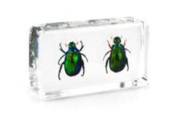 Transparent Mice NZ - 2 Stag Beetles Specimen Acrylic Resin Embedded Nature Beetles Transparent Mouse Paperweight Kids Science Learning&Discovery Education Kits