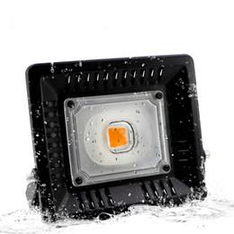 Luz de inundación de cultivo de planta de LED, 100 vatios Lámpara de cultivo de planta de COB de LED para la planta de exterior / interior Flor Vege, IP65 A prueba de agua Proyector de luz LED en venta