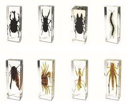 Toy bugs insecTs online shopping - Real D Educational Insect Specimem Toys Gifts Acrylic Resin Embedded Bugs Collect Transparent Mouse Paperweight Kids Science Learning Kits