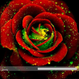 heirloom flower seeds 2020 - wholesale50 Heirloom Big Blooming Red Green Rose Bush Flower Seedsbonsai plant garden