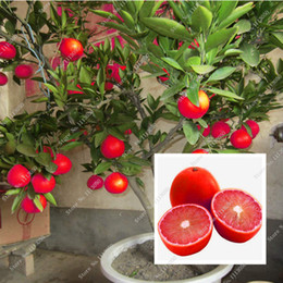 Wholesale lemons trees resale online - 20 Red Lemon Seeds New Arrival Drawf Tree Bonsai Organic Fruit Seeds for Home Garden Supplies Easy Grow Exotic Seed Potted