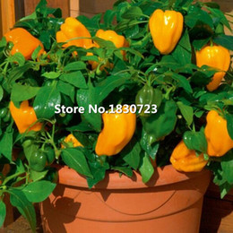 vegetable seeds free shipping NZ - 50 seeds pack Home Garden Plant,orange sweet bell peppers,Mohawk Sweet Pepper vegetable seeds,Free Shipping