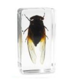 $enCountryForm.capitalKeyWord NZ - Black Cicada Specimen Acrylic Resin Embedded Insects Teaching Kits Transparent Mouse Paperweight Block Kids Science Learning&Education Tools