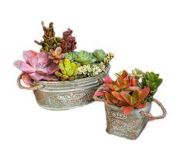 Discount cement pots - 2PCS MOQ Creative Cement Art Flower Pot With Rope Handle for Home Garden Floor Bedroom Table Planters Decorative Plant M