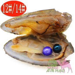 pearl oyster shell wholesale Australia - Female natural Akoya freshwater aquaculture love pearl oyster 6-7mm 28-color pearl twins pearl in the triangle shell oyster shel