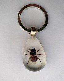 Os melhores presentes do dia das crianças Resin encaixaram espécimes do inseto Anéis principais de Transperant Keychain decorativo popular para chaves das malas de escola, do repouso ou do carro em Promoção