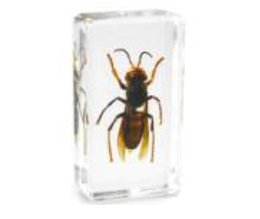 resin mice UK - Mines Bee Biology Specimen Acrylic Resin Embedded Real Insects Paperweight Transparent Mouse Block Kid New Science Learning&Education Toys