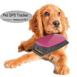 $enCountryForm.capitalKeyWord Australia - Waterproof GPS Tracker With Collar GSM GPRS Positioning Real Time Waterproof GPS Tracker Dog Pet Via Website & iOS APP
